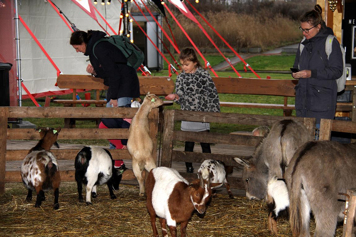 Kerstcircus Almere , Kinderboerderij